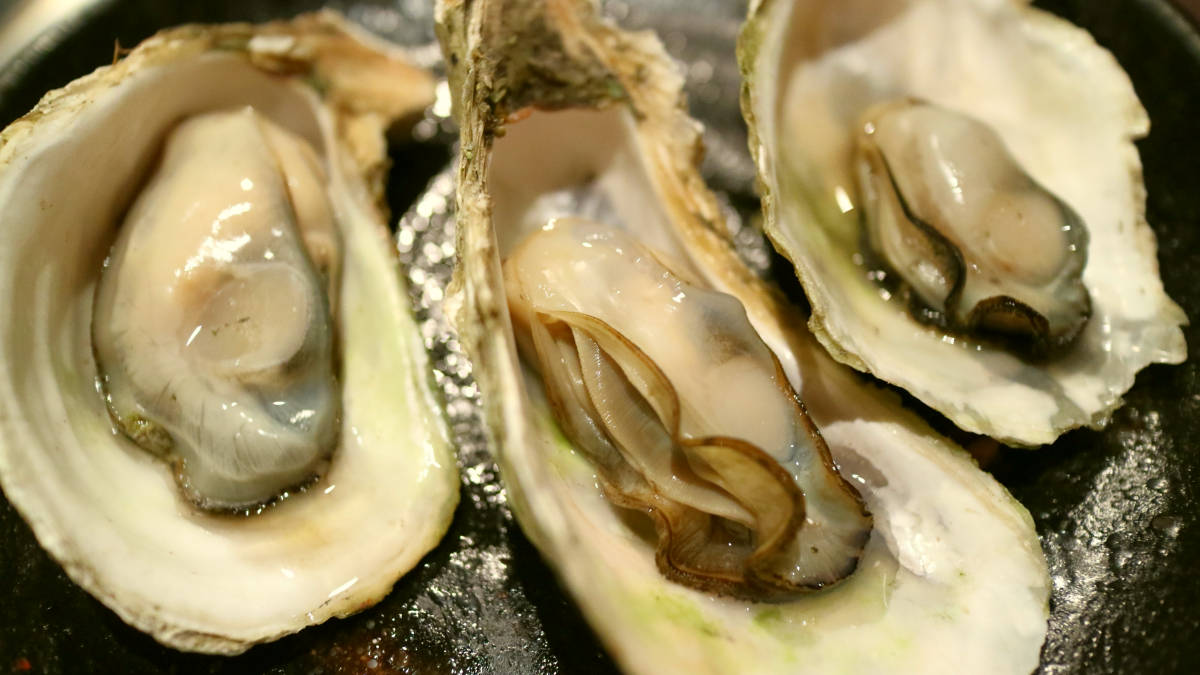 Oyster shell clams | Foods That Increase Libido Naturally | foods that help sex drive